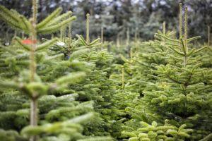 Prodej vánočních stromků Praha Zahradní centrum Horní Počernice