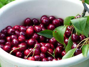 Seznam ovocných stromů a keřů k prodeji - 1187592 -