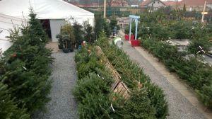 Vánoční stromky - prodej zahájen - 1187609 -