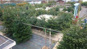 Vánoční stromky - prodej zahájen - 1187599 -