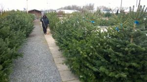 Vánoční stromky - prodej zahájen - 1187601 -