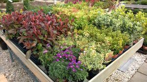 VÝPRODEJ- 50% sleva na vybrané rostliny + NOVÉ PODZIMNÍ ROSTLINY - 1187527 -