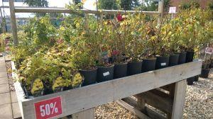 VÝPRODEJ- 50% sleva na vybrané rostliny + NOVÉ PODZIMNÍ ROSTLINY - 1187531 -