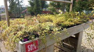 VÝPRODEJ- 50% sleva na vybrané rostliny + NOVÉ PODZIMNÍ ROSTLINY - 1187532 -