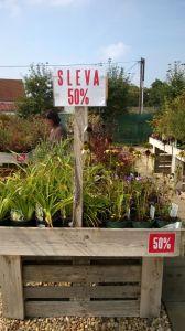 VÝPRODEJ- 50% sleva na vybrané rostliny + NOVÉ PODZIMNÍ ROSTLINY - 1187534 -