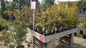 VÝPRODEJ- 50% sleva na vybrané rostliny + NOVÉ PODZIMNÍ ROSTLINY - 1187536 -