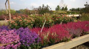 VÝPRODEJ- 50% sleva na vybrané rostliny + NOVÉ PODZIMNÍ ROSTLINY - 1187522 -