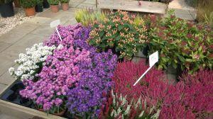 VÝPRODEJ- 50% sleva na vybrané rostliny + NOVÉ PODZIMNÍ ROSTLINY - 1187523 -