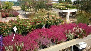 VÝPRODEJ- 50% sleva na vybrané rostliny + NOVÉ PODZIMNÍ ROSTLINY - 1187524 -