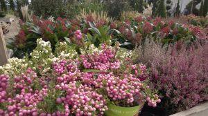 VÝPRODEJ- 50% sleva na vybrané rostliny + NOVÉ PODZIMNÍ ROSTLINY - 1187526 -