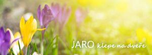Jaro je tu, pomalu ale jistě - 1188404 - Jaro 2020 Zahradnictví Praha Horní Počernice