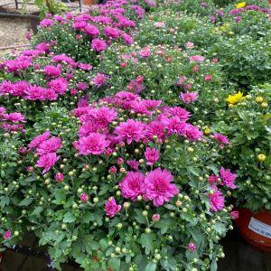 Podzim hýří barvami - 1188793 -