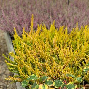 Podzim hýří barvami - 1188795 -