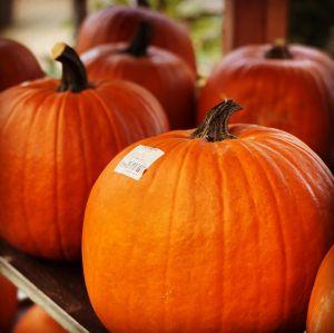 Podzim hýří barvami - 1188798 -