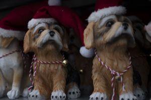 Vánoční prodejní výstava 2020 - 1188816 -