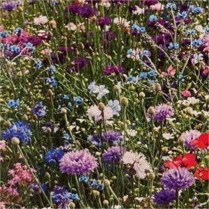 Květinová směs Květinové sny