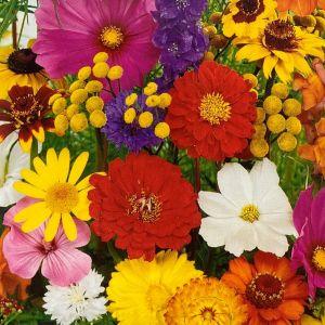 Květinová směs LETNÍ KVĚTINOVÉ KOUZLO