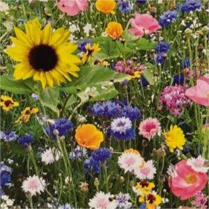 Květinová směs ZAHRADNÍ LÁSKA - Kiepenkerl