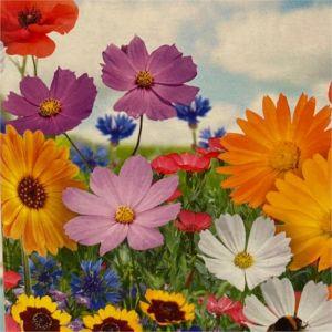 Rychle rostoucí květinový mix