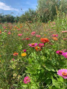 Zahrada plná života
