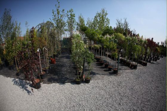 Alejové stromy 1