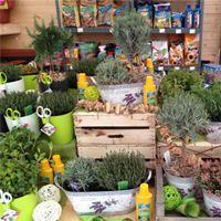 Bylinky a zelené koření