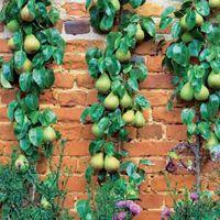 Ovocné rostliny