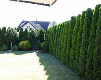 Stříhání a úpravy živých plotů